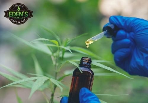 CBD oil being extracted from the hemp plant