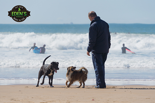 Man on beach walking his dogs for exercise