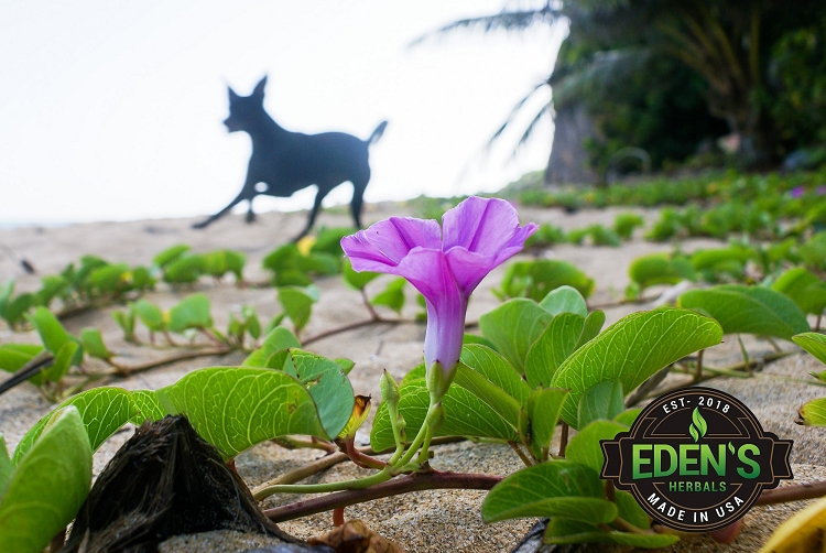 Dog running on beach with flower in foreground