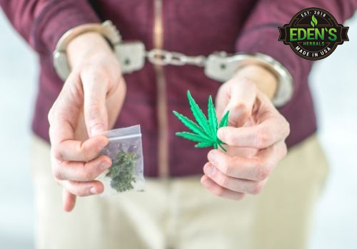 Man holding cannabis is handcuffed as a result of the war on drugs
