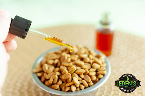 CBD oil tincture being added to dog food